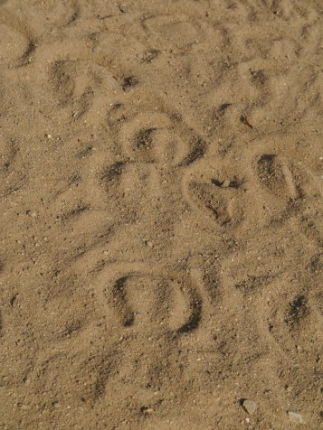 Hoofprints in Hyde Park