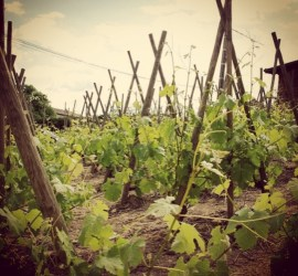 Learn about French wine