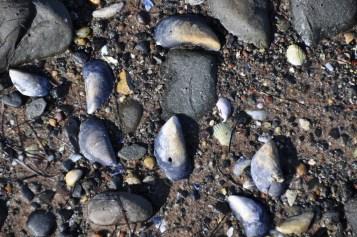 Islandhill mussels