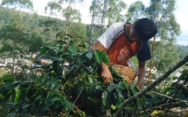 Perú: los niños del café