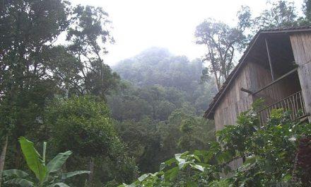 Nicaragua apuesta al emprendimiento mediante sus bosques