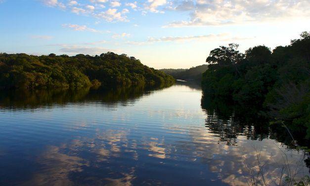 InfoAmazonia: periodismo de datos para entender y salvar la selva