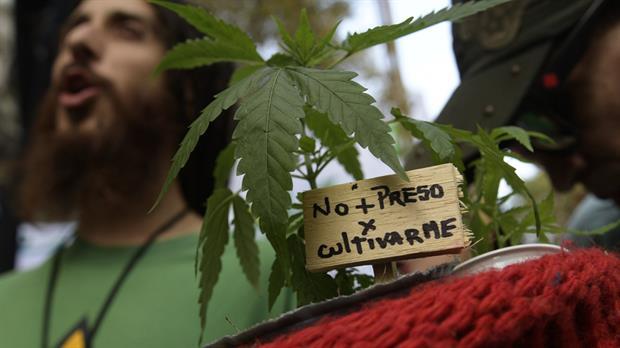 Apenas 1,120 personas se registran como usuarios de cannabis en farmacias de Uruguay