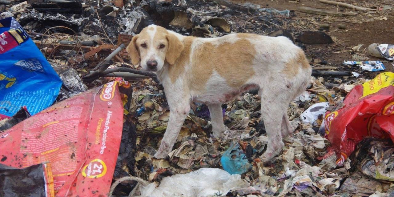 Este albergue de perros se viralizó como un paraíso, ¿realmente lo es?