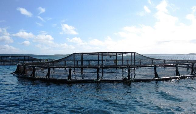 Las distribuidoras de pescado apuestan por la acuicultura