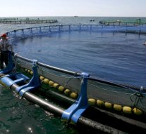 La CNMC inspecciona entidades del mercado de la acuicultura para detectar posibles prácticas anticompetitivas