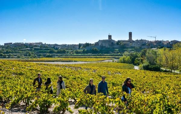 Lleida a través de su Ruta del Vino