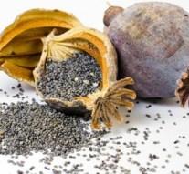 Las propiedades y los beneficios del uso de las semillas de amapola