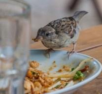 OPSA lanza la Guía Nacional de Gestión de Alertas Alimentarias