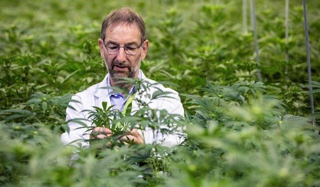 Llega a España el primer medicamento elaborado con un derivado del cannabis