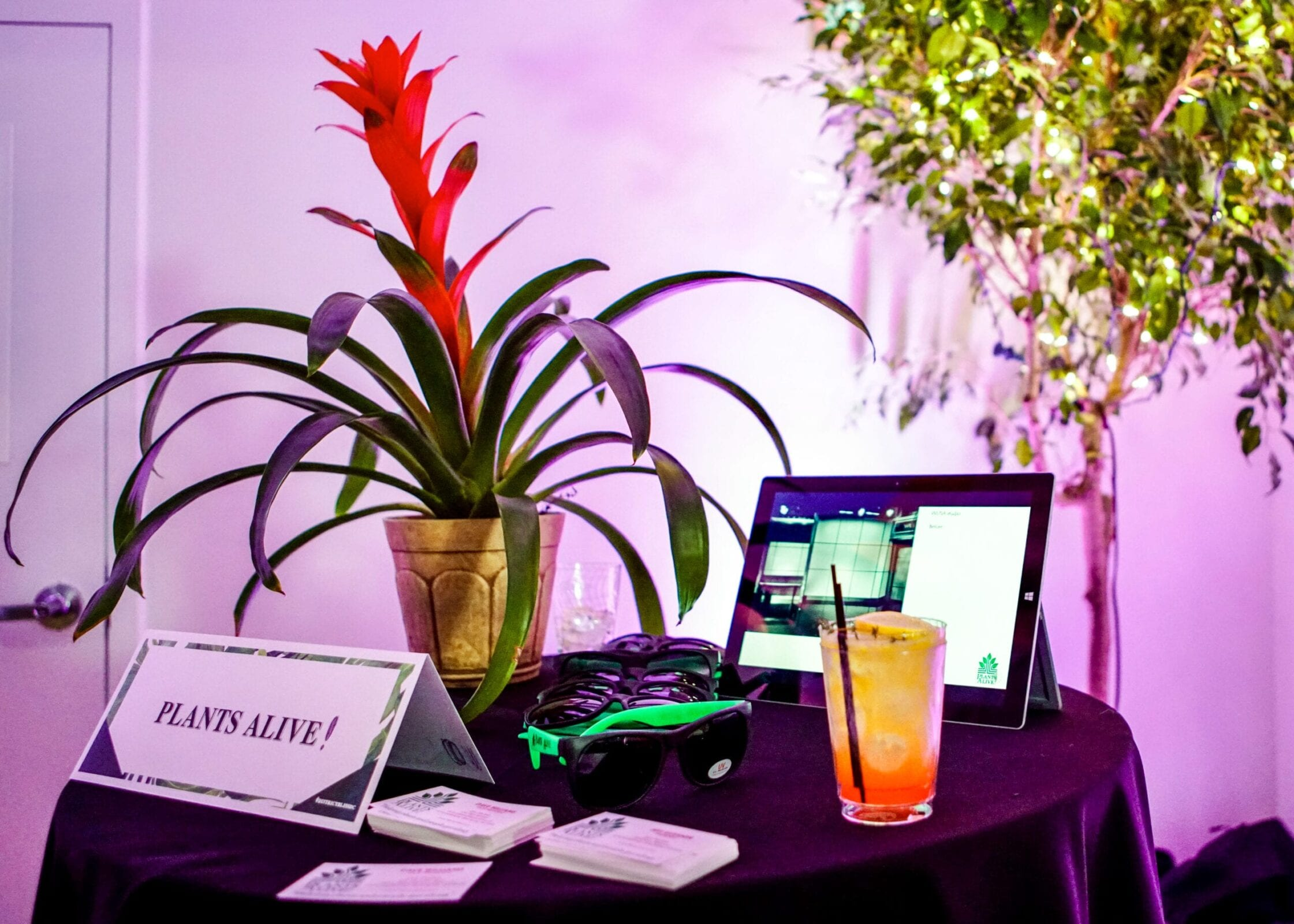 Plants Alive! brought gorgeous plant rentals in for the District Bliss Vendor Social, a light-hearted, welcoming, casual networking event