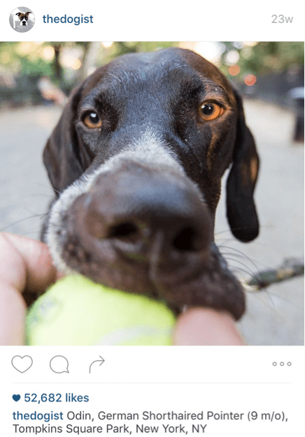 dogist 2