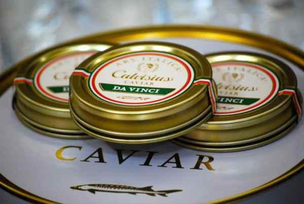 Caviar Da Vinci, caviar calvisius lyon, esturgeon adriatique, espèce esturgeon italie, caviar italien