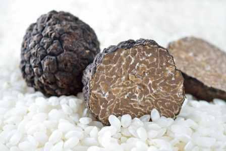Conservation de la truffe fraîche, truffe fraiche lyon, conserver truffe noire, truffe blanche lyon, distrilux truffe lyon