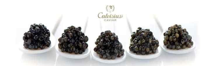 oenologie & caviar, Dégustation prestige Caviars et Champagnes Laurent Perrier le 06/12/2019, distrilux caviar craponne, caviars ouest lyonnais, inter caves craponne, caviste ouest lyonnais