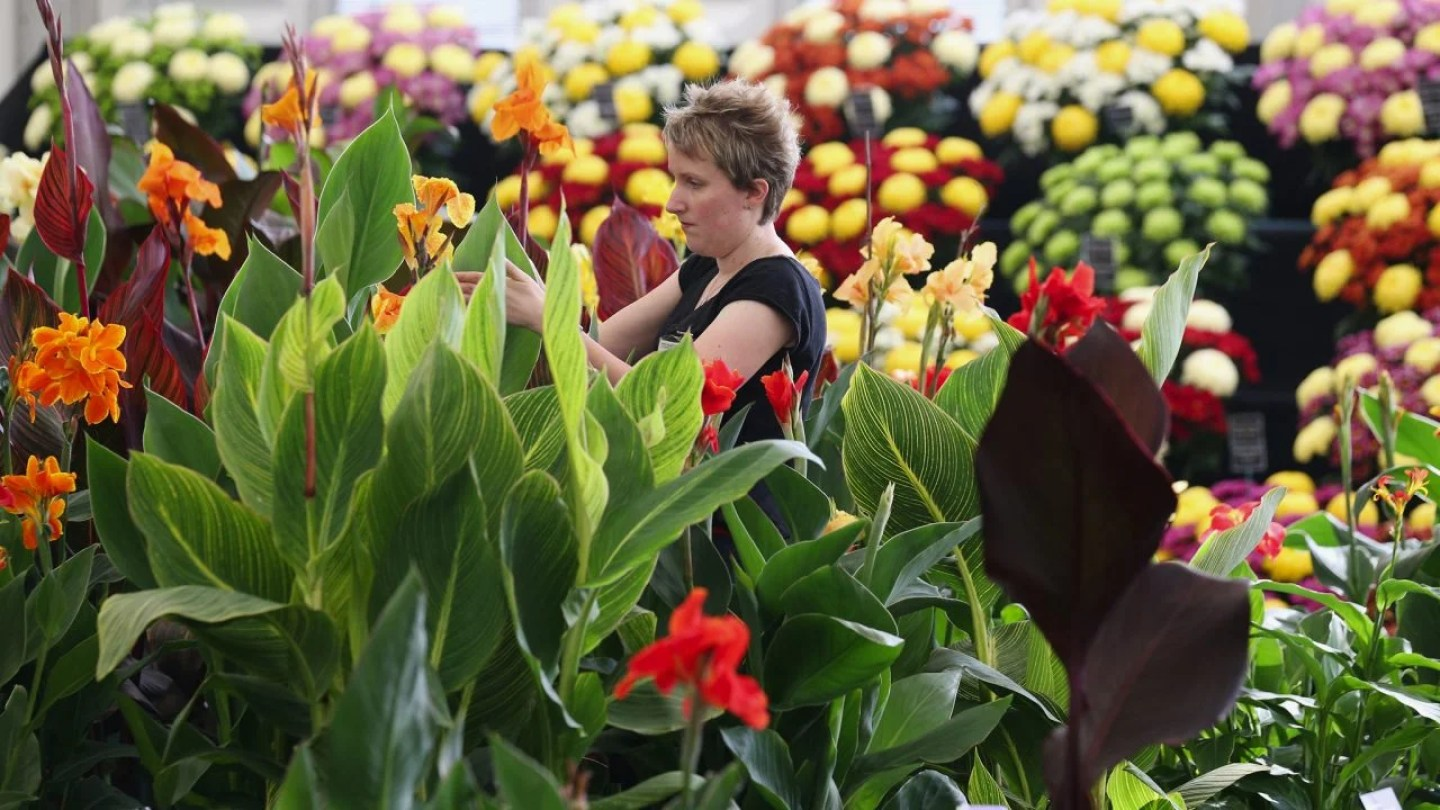 Preparations Are Made For The Hampton Court Palace Flower Show