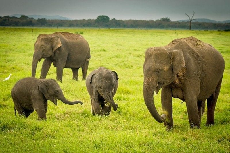 Get to Know Natural Parks in Sri Lanka
