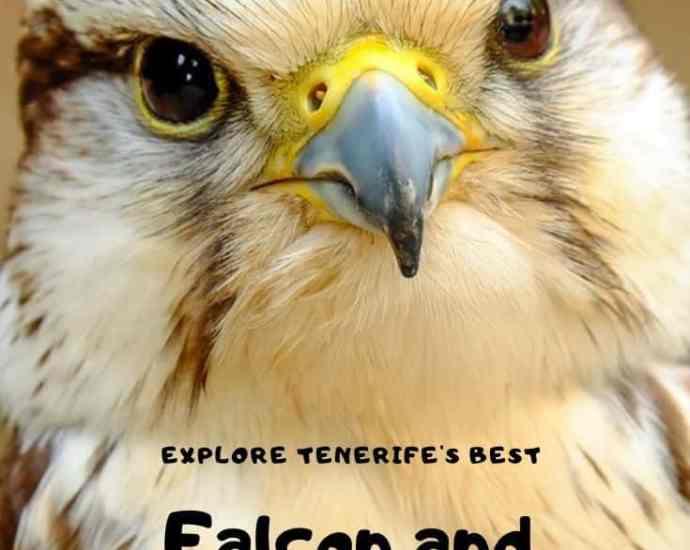 falcon and eagle show