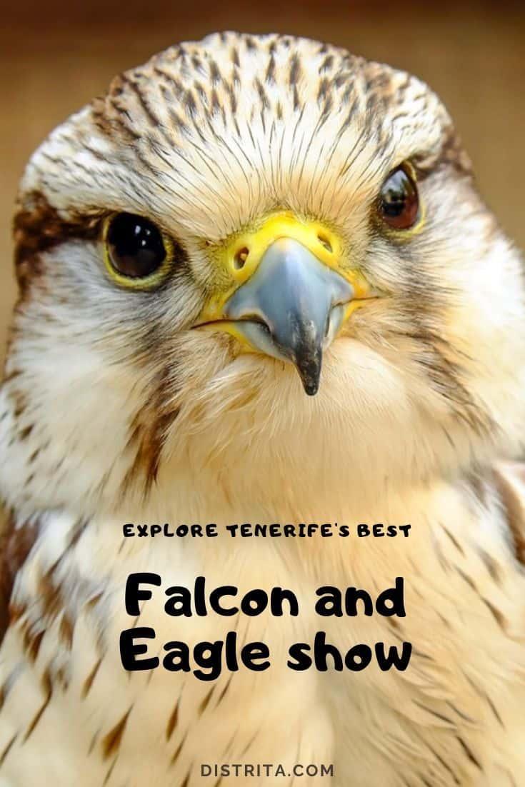 falcon show