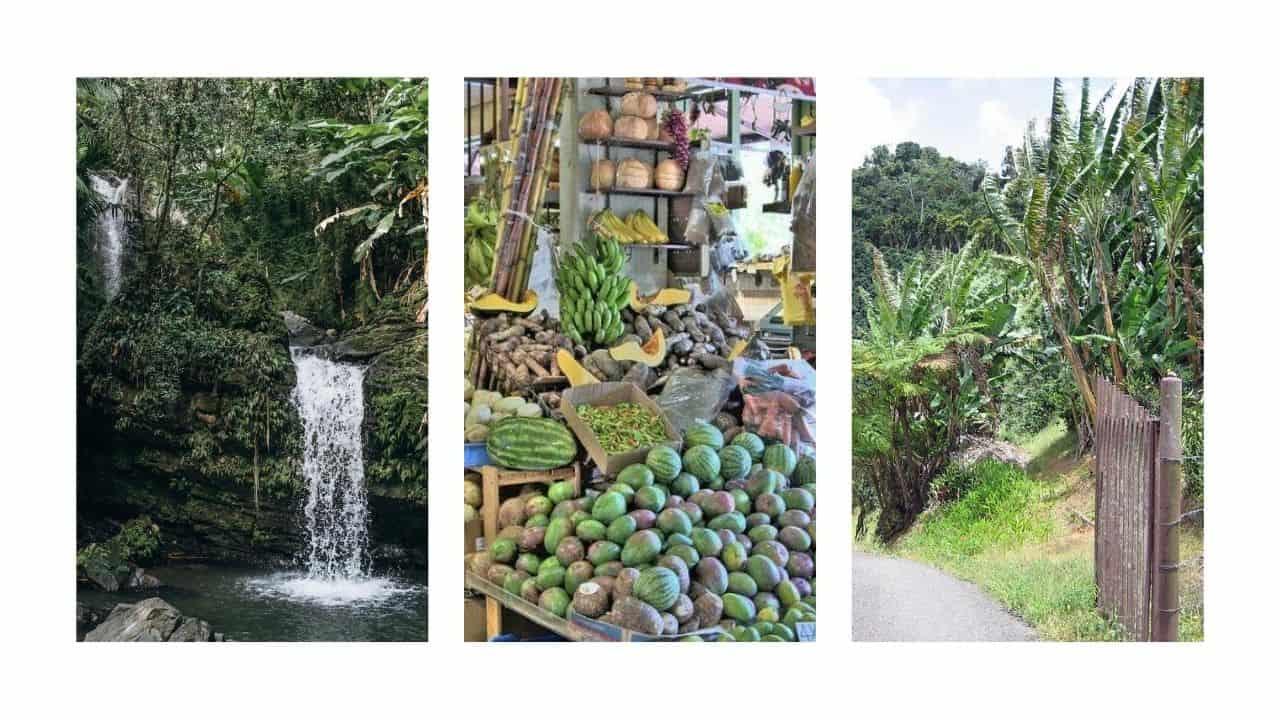 Puerto rico rainforest, street market and coffee plantation