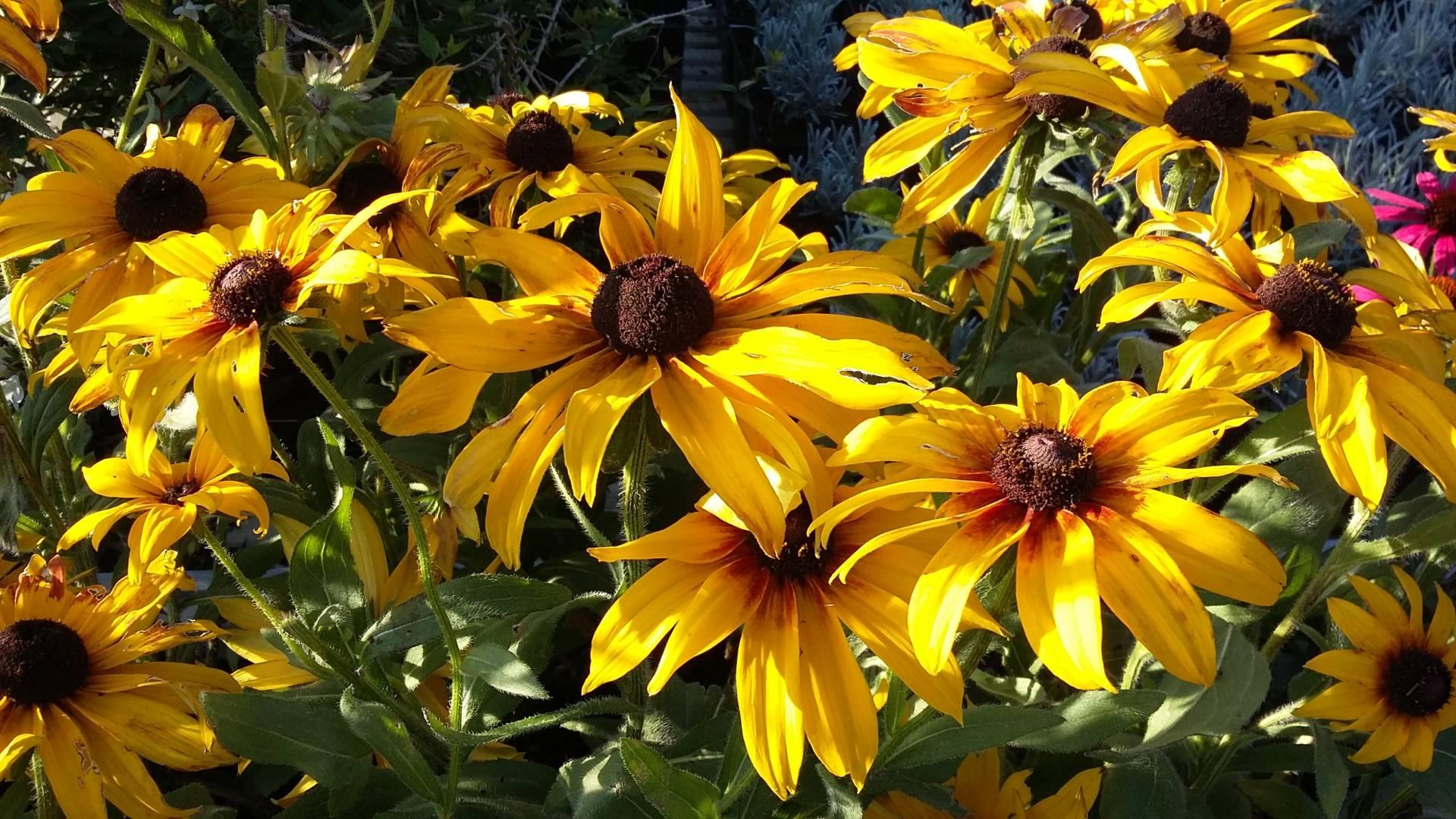 Nyári virágzású , magas évelő csomag 8 x L méret