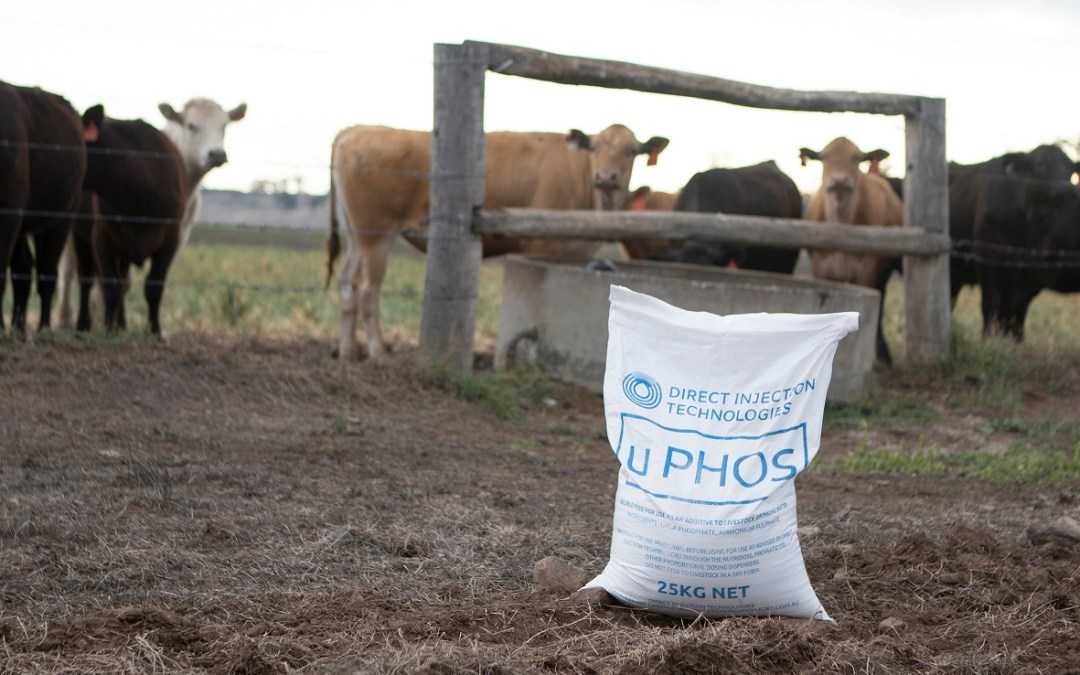 P is the KEY to Cattle Development