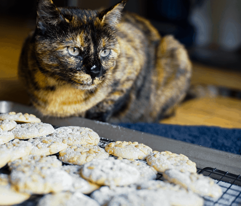 Tortoiseshell cat with powdered sugar on her nose and chin next to a pan of freshly baked Italian pignoli cookies.