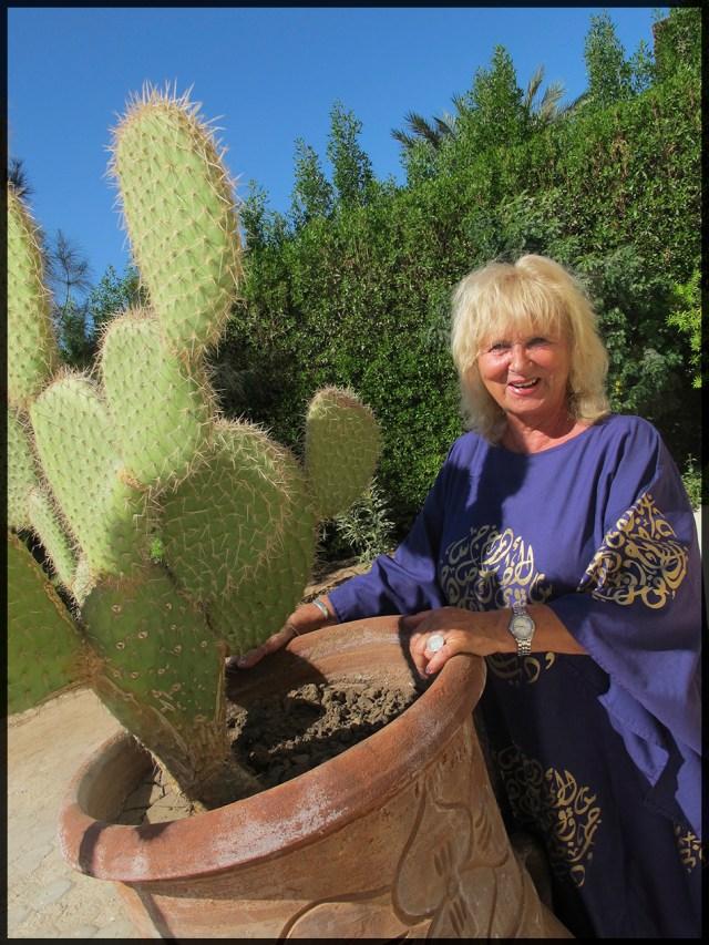 El Gouna Joh kaktus