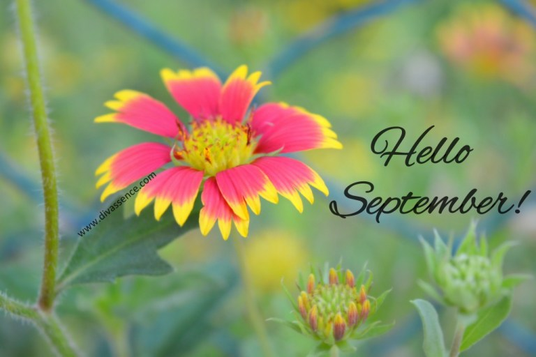 Hello September nature photography