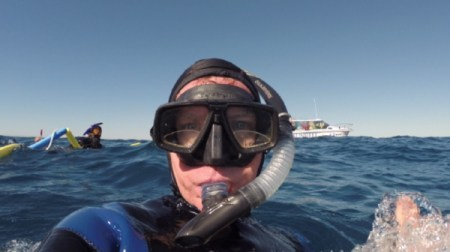 Snorkeling with Humpback whales in Mooloolaba, QLD