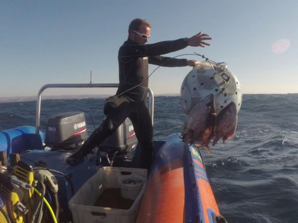 African Dive Adventures-launching boat Protea Bank-bait ball-throwing bait ball over side