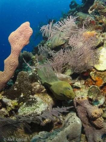 Moray eel - Punta Perdiz