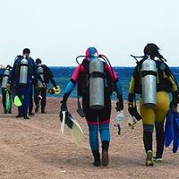 Wetsuit divers head for a shore dive