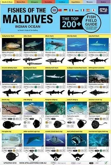 Maldives Field Fish Guide - cover
