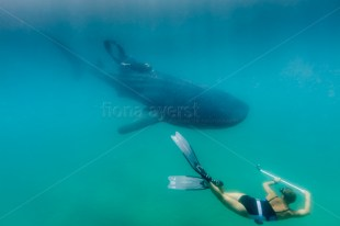 Capturing video of whale sharks