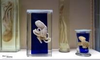 Octopus_Musee_Oceanographique_Monaco_2013