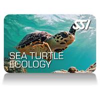 sea-turtle-ecology