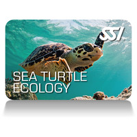 sea-turtle-ecology