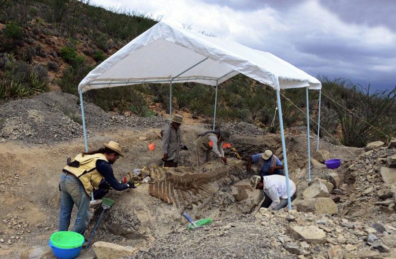 Abren al público sitio web del Consejo de Paleontología