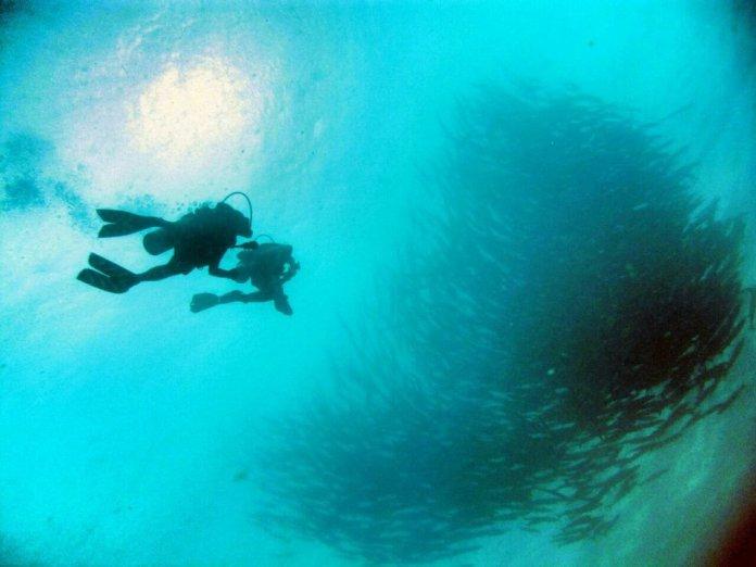Diving In Java