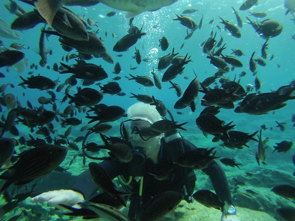 Diver Fish Rock