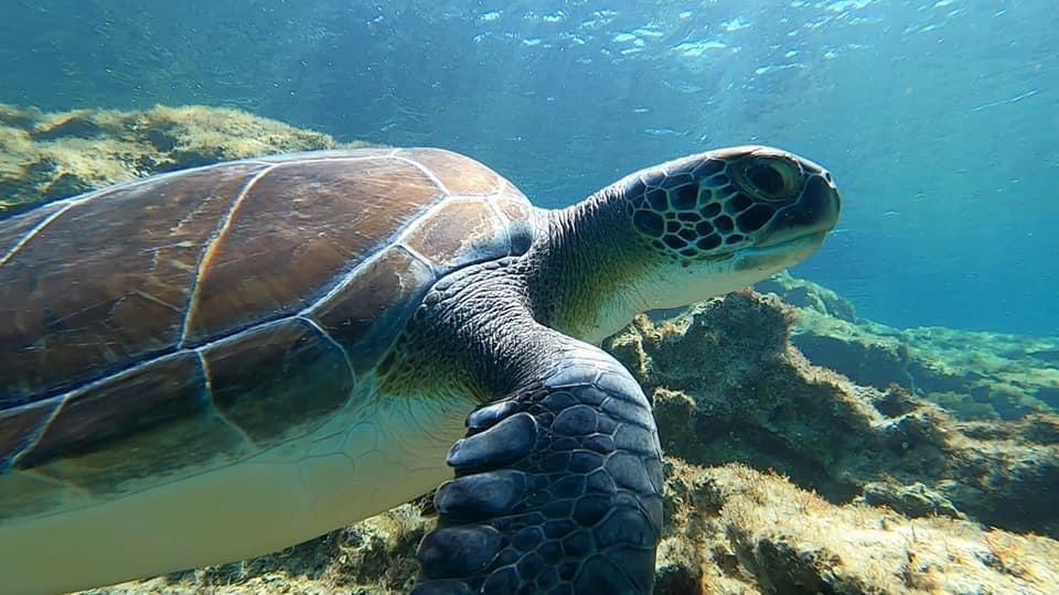 Turtle @ Green Bay