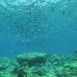 Fish Rock @ Green Bay
