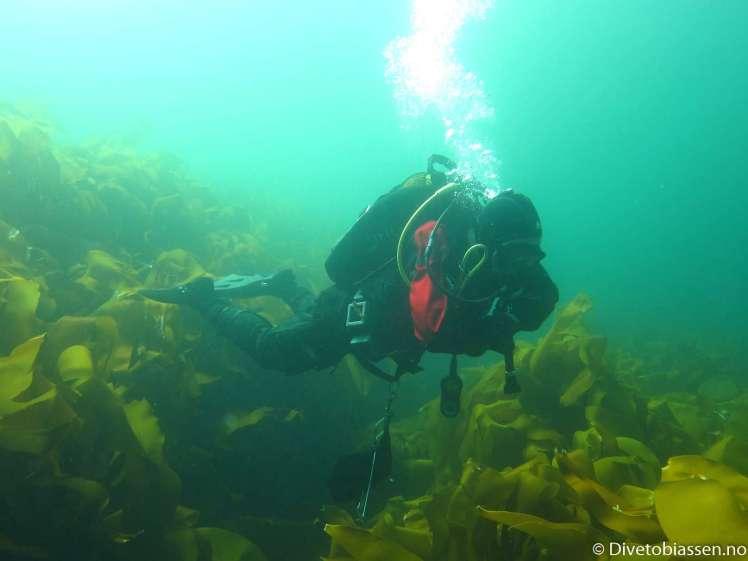 Dykker, tare, luftbobler, Oppfriskningskurs, (Vurdere et nytt dykkerkurs)