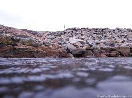 Steinrøys, hav, dykker