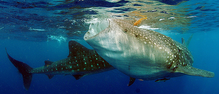 Image result for isla mujeres mexico scuba diving