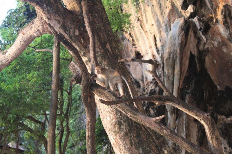 Mono en Tailandia