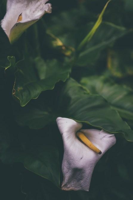 Garden Wedding139
