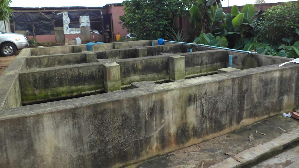 Catfish farming in Nigeria with concrete ponds
