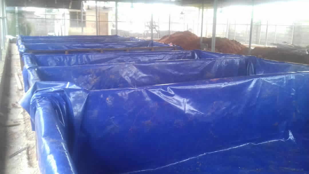 Catfish farming in Nigeria with plastic tanks and tarpaulin ponds